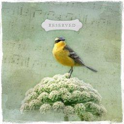 BirdSong Designs
